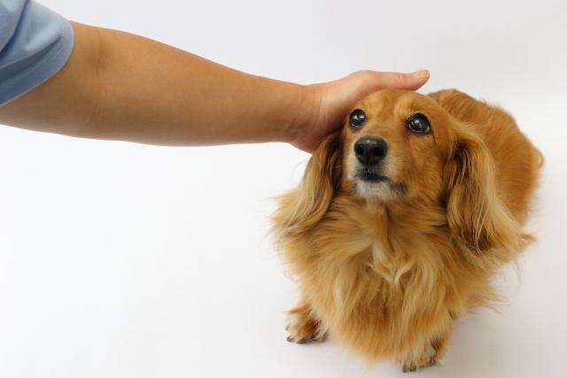 犬 褒める しつけ